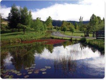 pond-w